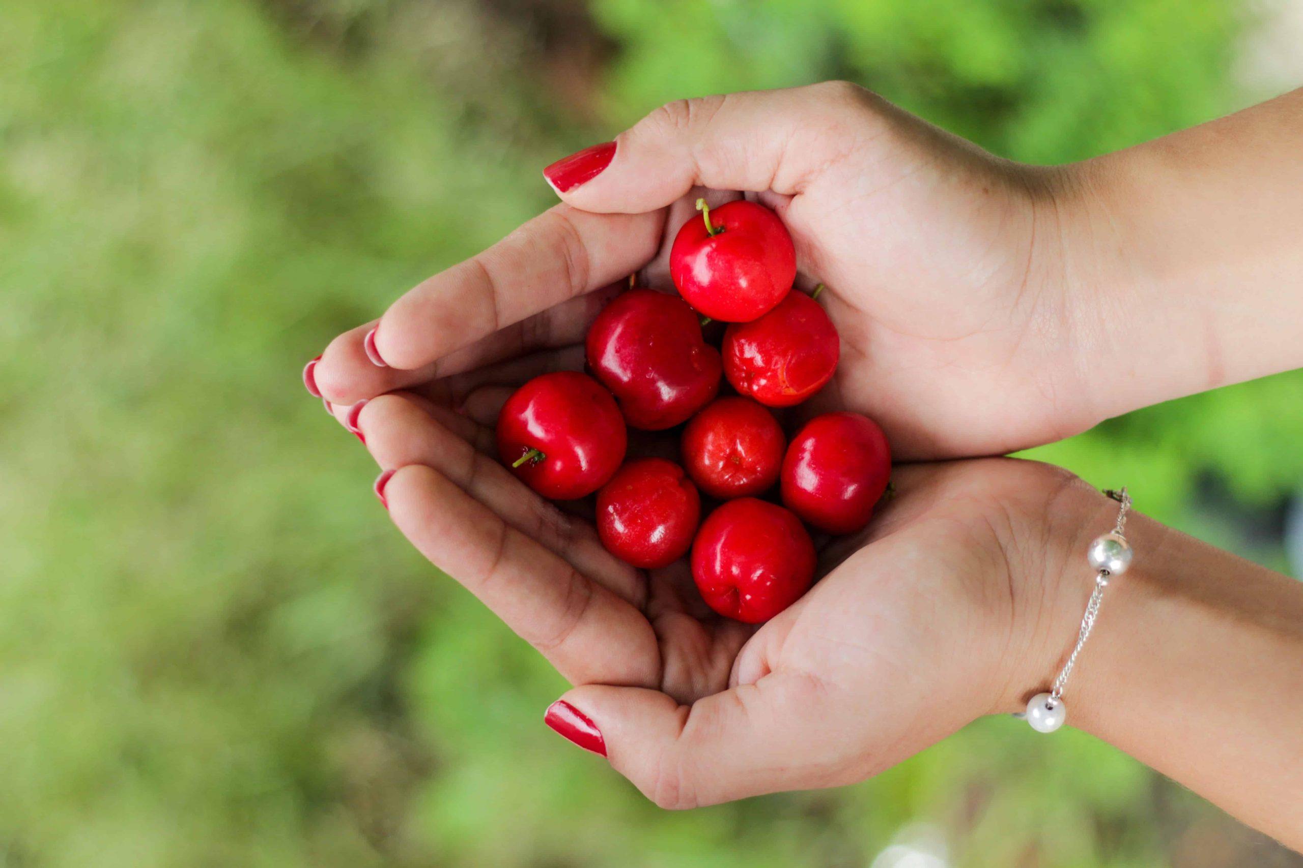 Frauenhände halten Acerola-Früchte