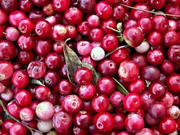 Cranberries-OPC