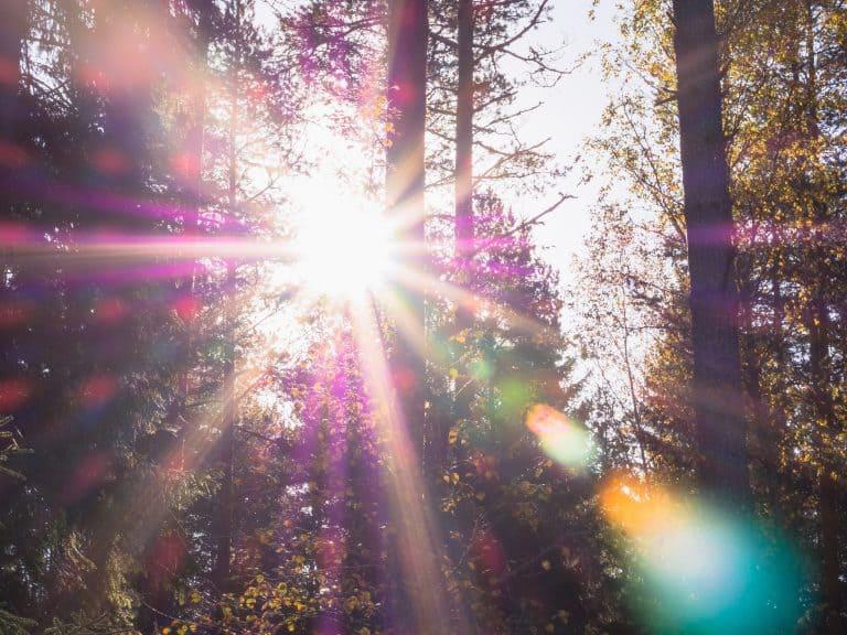 Sonne Wald