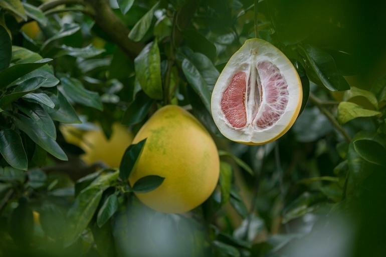 Grapefruitkernextrakt-3