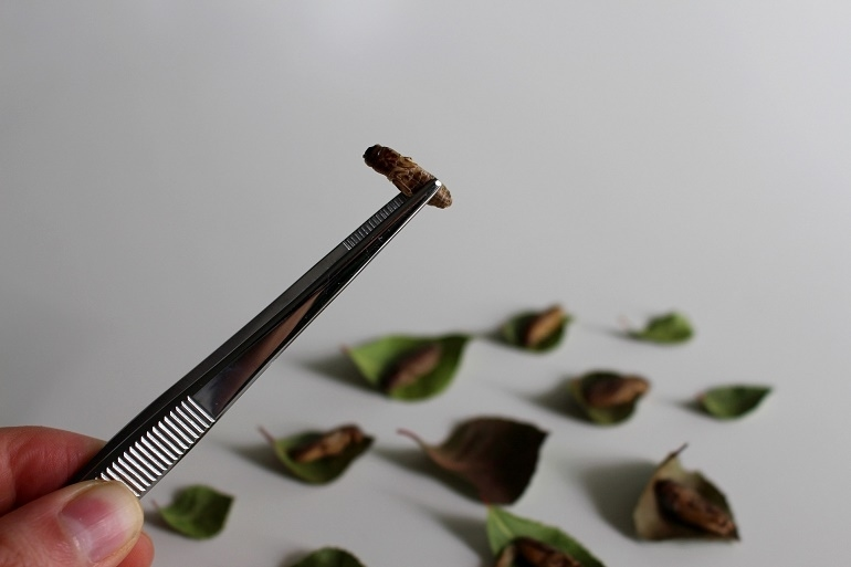 Insektenprotein-2